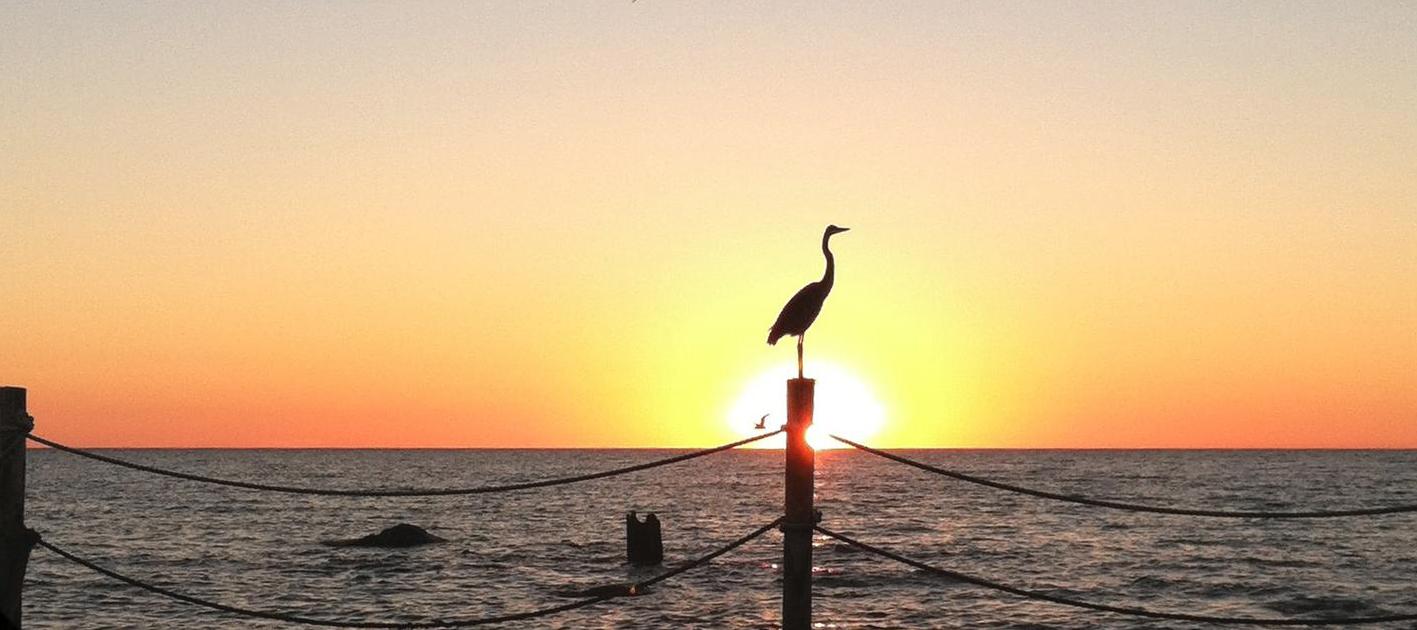 sunrise-bird